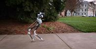 Amerikāņu zinātnieki demonstrē soļojošu robotu bez ķermeņa un galvas