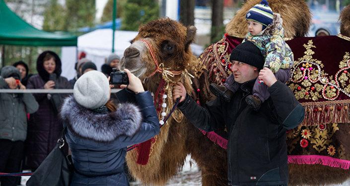 Верблюд пользовался популярностью у детей и взрослых