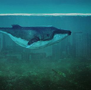Иллюстрация Синий кит