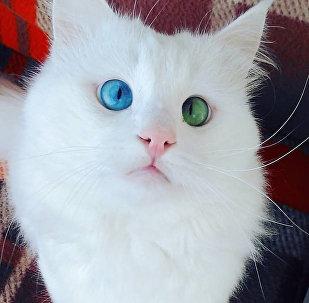 Kaķis Alošs