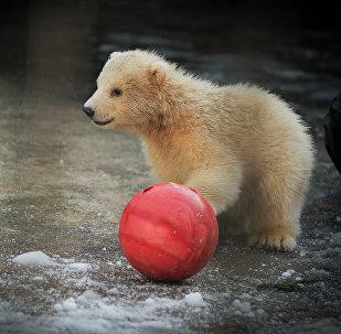 Starptautiskā polārlāča diena