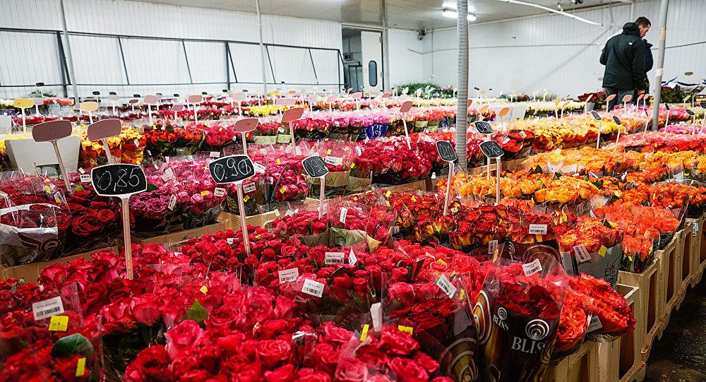 Rozes ziedu bāzē