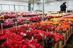 Розы на цветочной базе King's flowers на ул. Краста