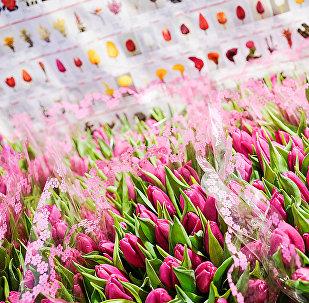 Тюльпаны на цветочной базе на ул. Цесу