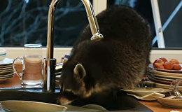 Jenots iezadzies virtuvē un nomazgājis kaudzi netīru trauku