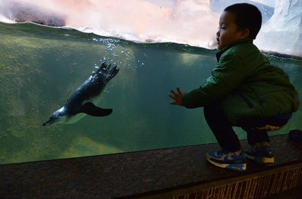 Ребенок наблюдает, как пингвин Гумбольдта плавает под водой в вольере в Московском зоопарке