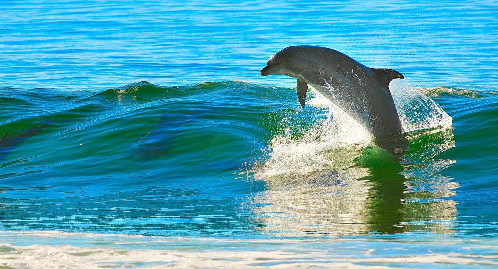 Сицилийские рыболовы устроили забастовку из-за дельфинов