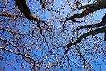 Деревья на фоне голубого неба весной