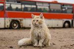 Кот, архивное фото