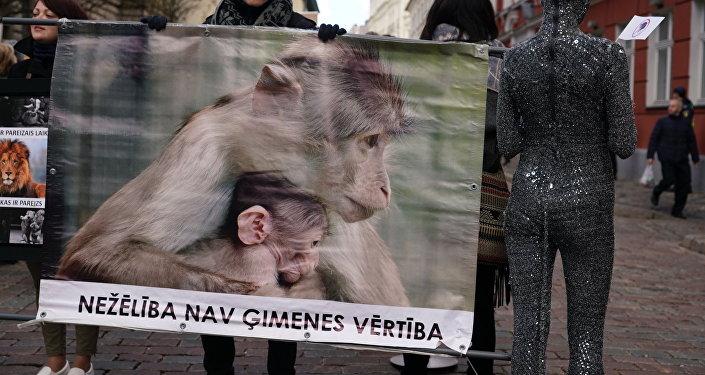 Вцирках Латвии запретили использовать диких животных