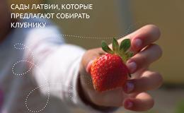 Сады Латвии, которые предлагают собирать клубнику