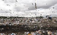 Sadzīves atkritumu poligons. Foto no arhīva
