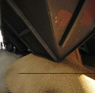 Разгрузка железнодорожного вагона с зерном