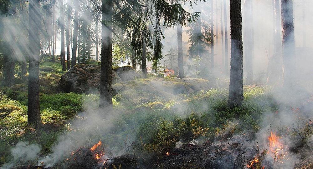 Meža ugunsgrēks. Foto no arhīva