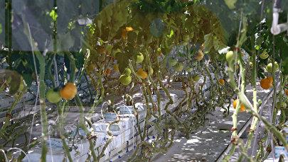 Getliņi