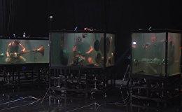 Датские музыканты Between Music сыграли в аквариумах