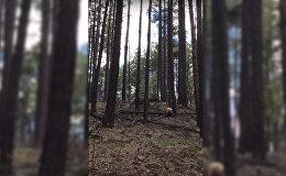 Alnene izglābusi savu mazuli no lāča
