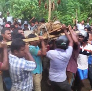Šrilankā atraduši piecus metrus garu krokodilu
