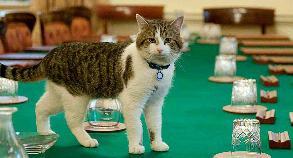 Ларри, кот из резиденции премьер-министра Великобритании