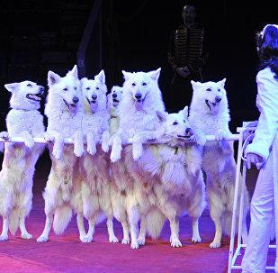 Suņi. Foto no arhīva