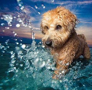 Лучшие снимки собак: победители конкурса Dog Photographer of the year