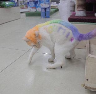 Varavīkšņotais kaķis no Tjumeņas meklē draugus