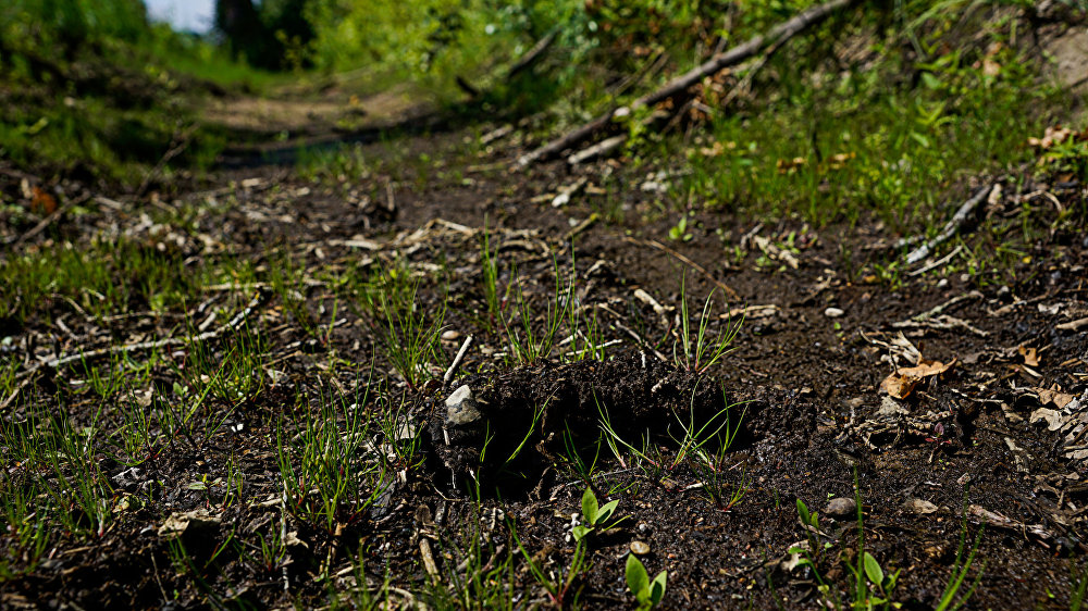Предполагаемый след Вани в канаве, недалеко от посёлка Дубени