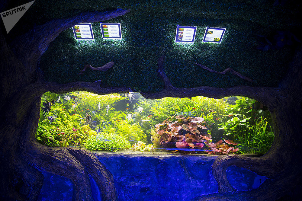 Океанариум - полное погружение в глубоководную реальность