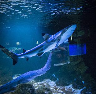 Okeanārijs – iegrimšana zemūdes dzīvē