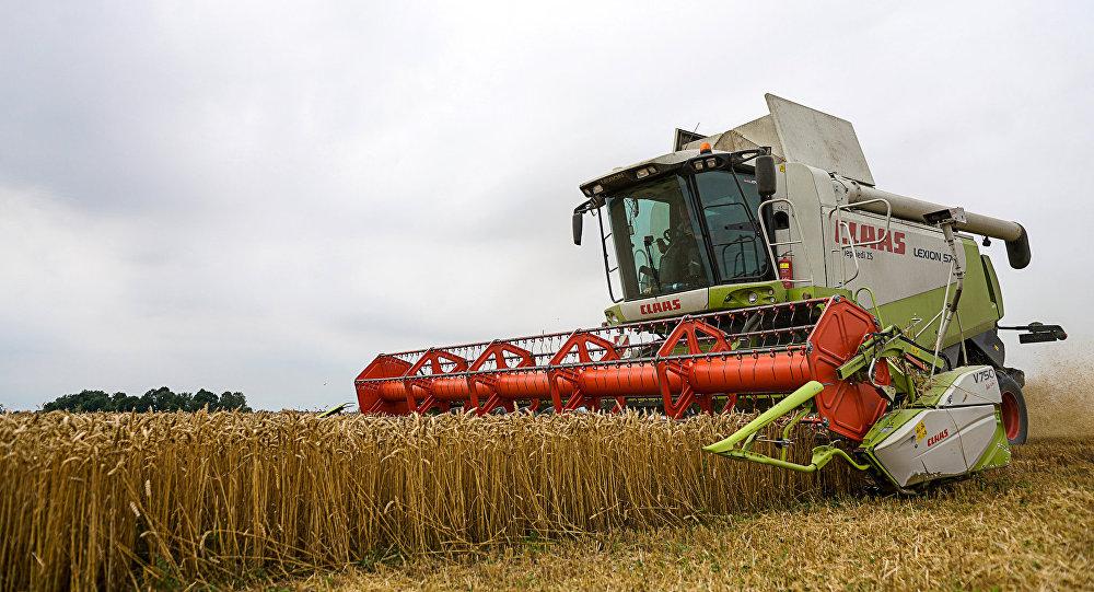 Комбайн на уборке пшеницы