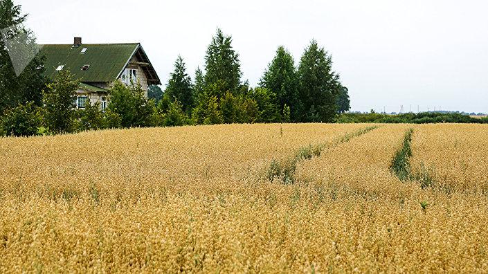 30 гектаров поля Гундарса Лиепы