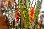 Выставка гладиолусов в Музее Природы