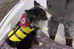 Поисковые собаки, принимавшие участие в поисках Надежды Калныни