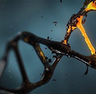 DNS molekula
