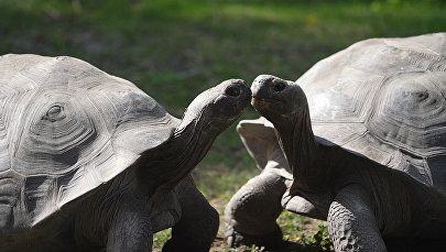 Министр обороны Латвии взвесил галапагосских черепах в Рижском зоопарке