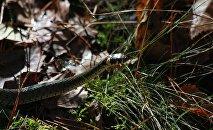 Змея в лесу