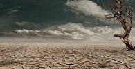Tuksnesis. Foto no arhīva.