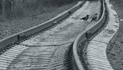 Птицы на рельсах