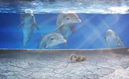 Delfīni aizskatījās uz vāverītēm amerikāņu akvārijā