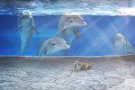 Дельфины наблюдают за белкой
