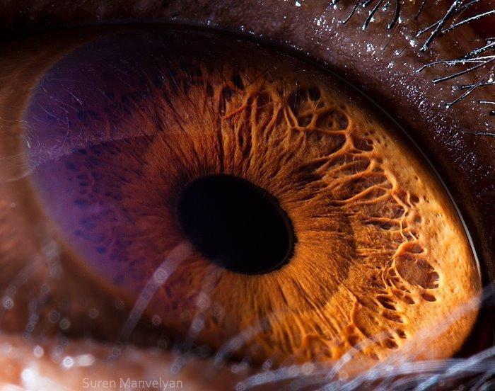 Глаз шимпанзе