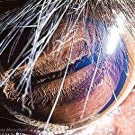 Глаз оленя Давида