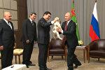 Гурбангулы Бердымухамедов подарил Путину щенка алабая
