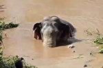 Десятилетнего слоненка спасли из реки в Таиланде