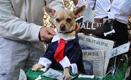Ņujorkā nosvinēja suņu Helovīnu