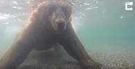 Медведь ловит рыбу в реке