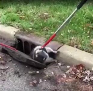 ASV resnu jenotu izglāba no kanalizācijas režģa