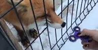 Lapsa Čeļabinskas zooparkā iemācījusies apieties ar spinneri