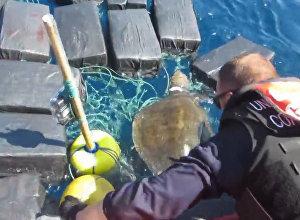 Bruņurupucis okeānā iestrēdzis starp 800 kilogramiem kokaīna