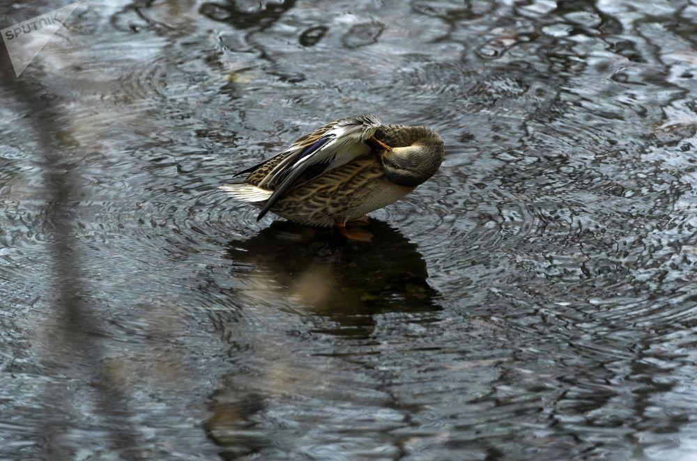 Vērojumi liecina, ka par karstās vasarās ūdens temperatūra Zilajos ezeros nepārsniedz 10 grādus. Ziemā ezeri neaizsalst